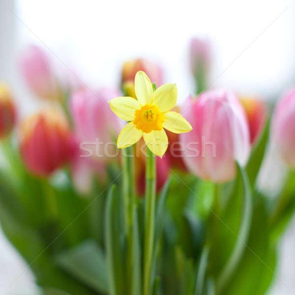Nergis çiçeklenme renkli lale Paskalya doğum günü Stok fotoğraf © BarbaraNeveu