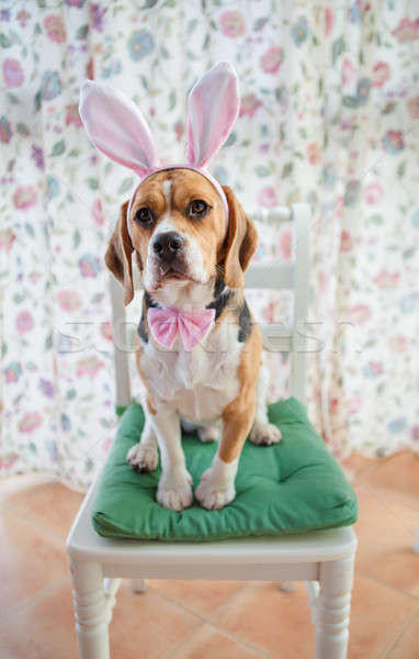 Young beagle wearing bunny ears Stock photo © BarbaraNeveu