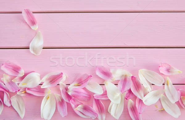 Fresh flower petals on pink Stock photo © BarbaraNeveu