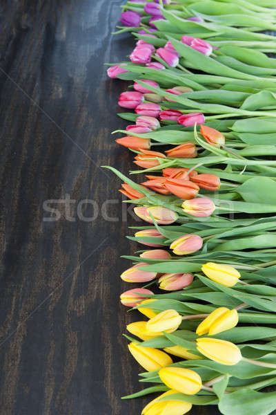 Tulips in bright colors Stock photo © BarbaraNeveu