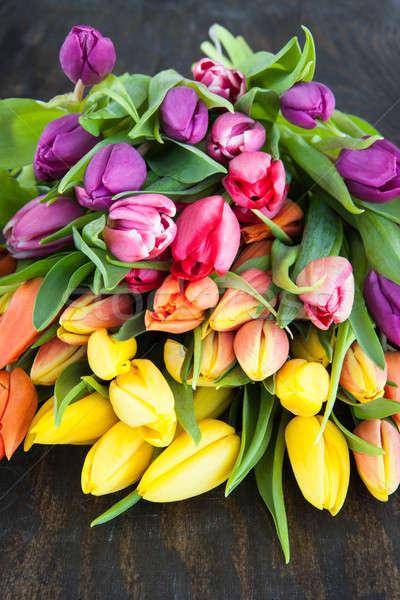 Tulips in bright colors Stock photo © BarbaraNeveu