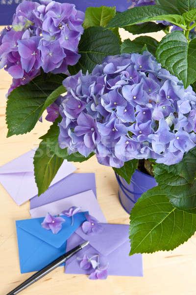 Blue hydrangea in vintage pot Stock photo © BarbaraNeveu