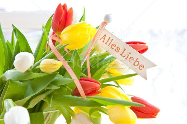 Fresh bouquet of tulips  Stock photo © BarbaraNeveu