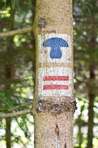 Tree trunk with hiking signs Stock photo © BarbaraNeveu