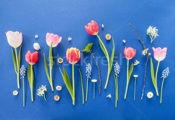 Colorful spring flowers on blue Stock photo © BarbaraNeveu
