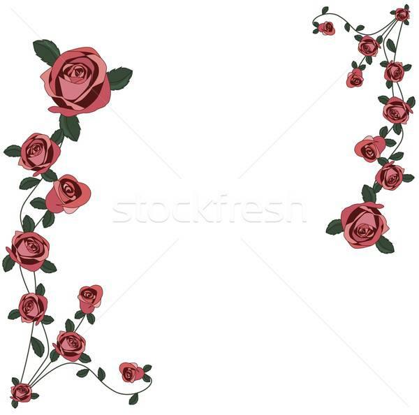 Güller çerçeve örnek beyaz arka plan Stok fotoğraf © BarbaRie