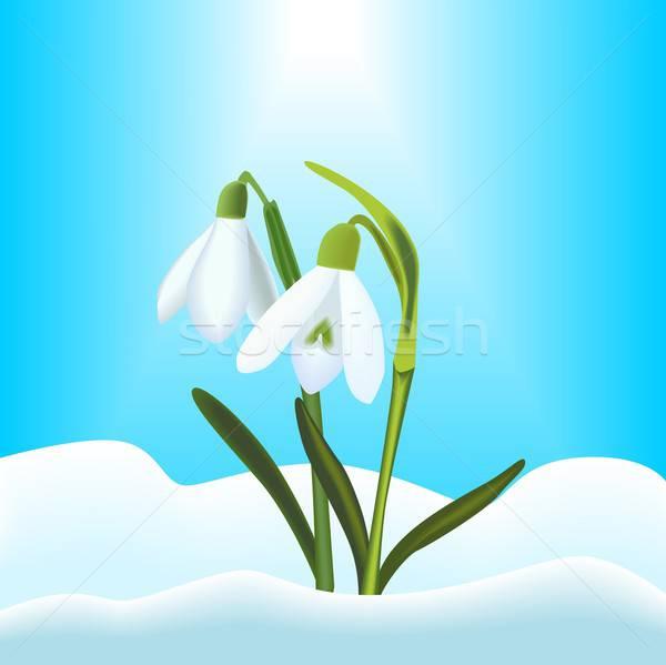 örnek kar mavi gökyüzü bahar mavi beyaz Stok fotoğraf © BarbaRie