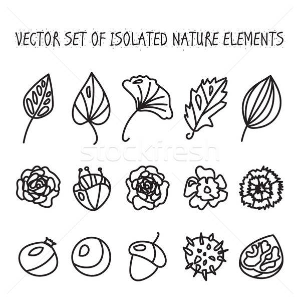 Vintage flowers, fruits and leaves icons collection Stock photo © barsrsind