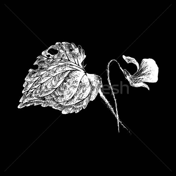 Vector flower violet by hatching Stock photo © barsrsind
