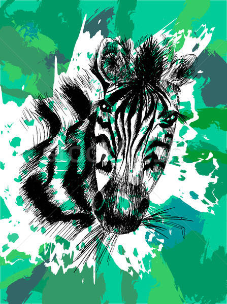 Vector zebra in eps Stock photo © barsrsind