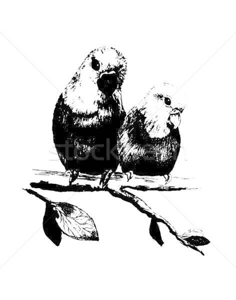 Illustration of two birds, parrots Stock photo © barsrsind