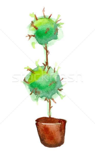 Vector aquarelle tree in pot Stock photo © barsrsind