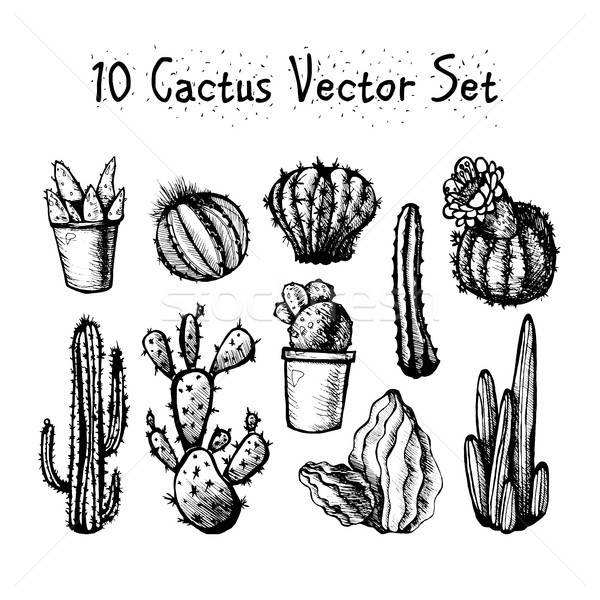 Hand Drawn Isolated Cactuses Set Stock photo © barsrsind