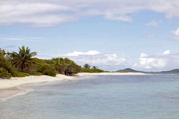 Spiaggia tropicale panorama spiaggia albero natura mare Foto d'archivio © bartekwardziak
