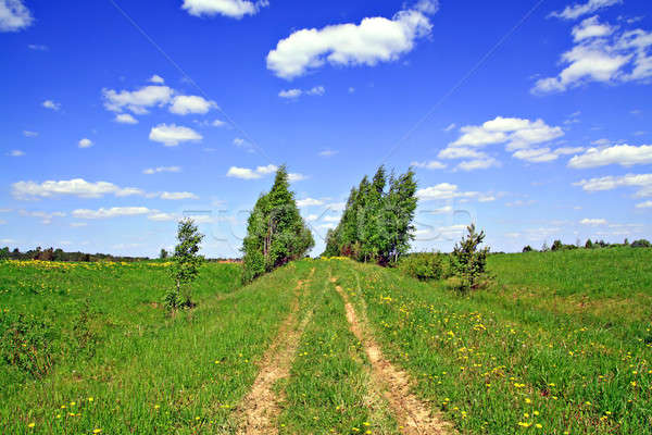 rural road Stock photo © basel101658