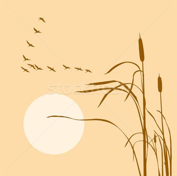 Stock photo: vector drawing