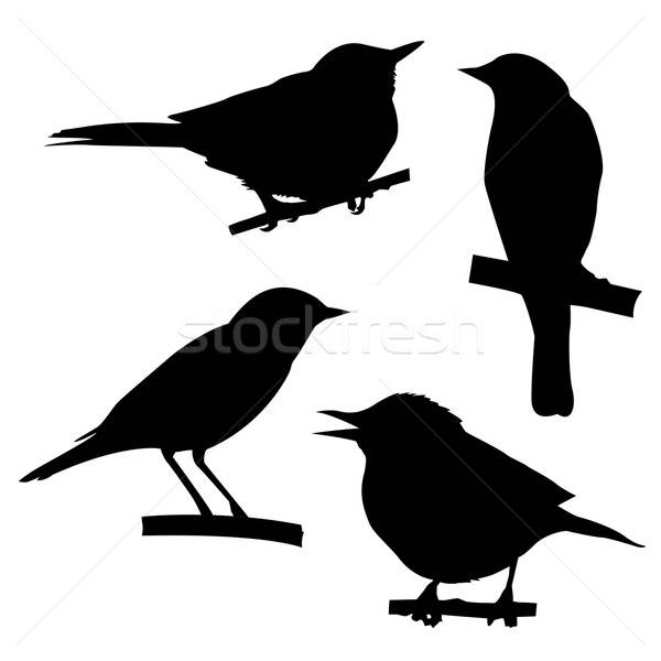 vector silhouettes of the birds sitting on branch tree Stock photo © basel101658