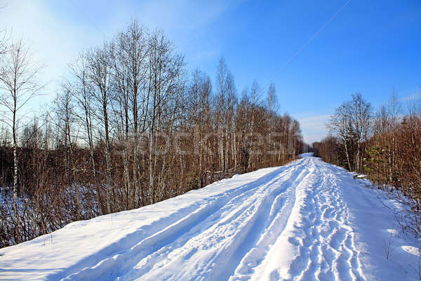 road in winter wood Stock photo © basel101658