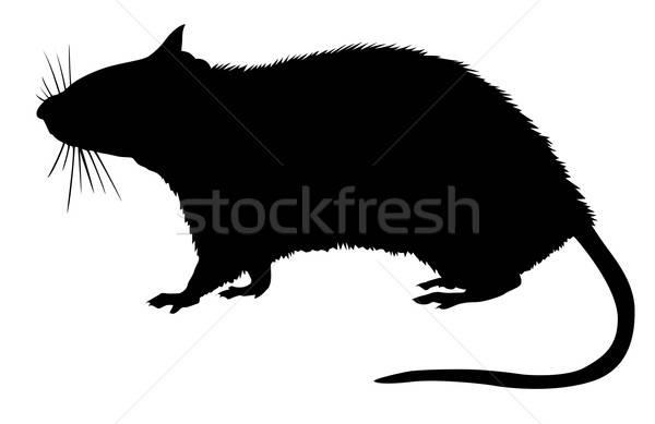 Vektör çizim siluet sıçan beyaz dizayn Stok fotoğraf © basel101658