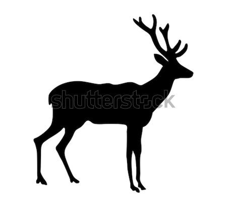 vector silhouette deer on white background  Stock photo © basel101658
