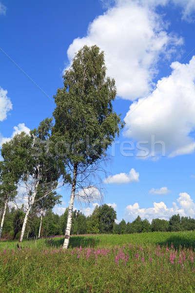 summer field Stock photo © basel101658
