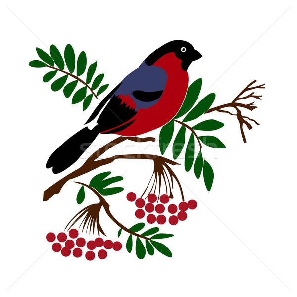 vector silhouette of the bullfinch on white background Stock photo © basel101658