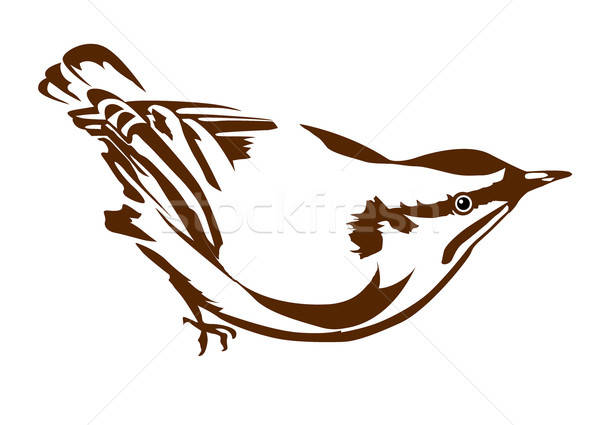 vector silhouette nuthatch on white background Stock photo © basel101658