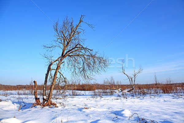 öreg fa tél mező égbolt fa Stock fotó © basel101658