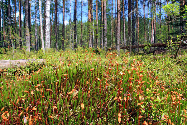 marsh moss Stock photo © basel101658