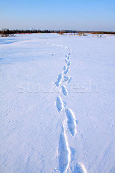 human trace on snow Stock photo © basel101658