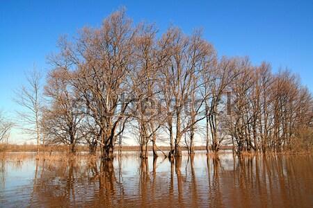 オーク 木材 春 洪水 テクスチャ 自然 ストックフォト © basel101658