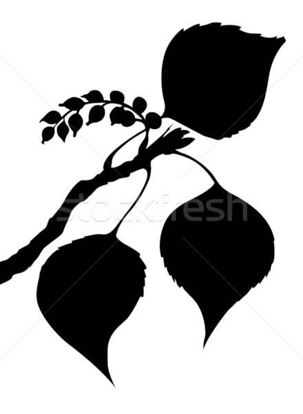 Wektora arkusza topola biały kwiat drzewo Zdjęcia stock © basel101658