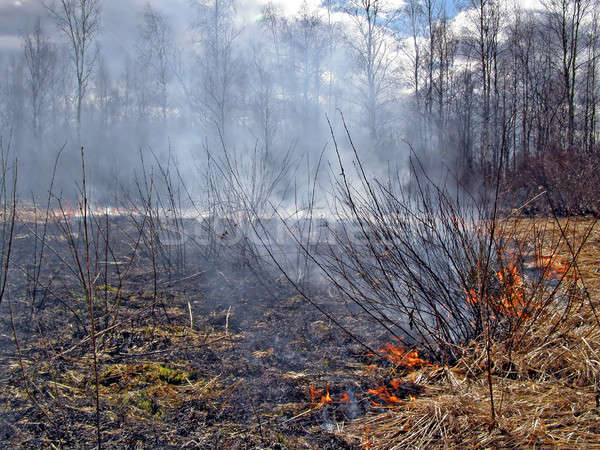 fire in wood  Stock photo © basel101658