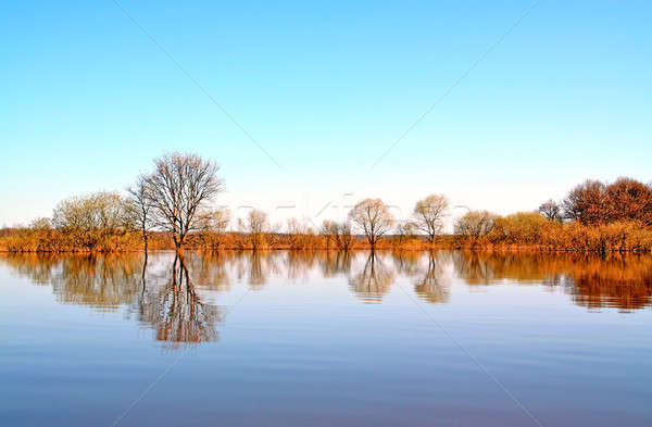 Stock fotó: Tavasz · árvíz · víz · erdő · tájkép · medence