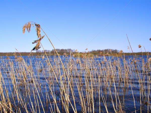 наводнения реке текстуры природы области синий Сток-фото © basel101658