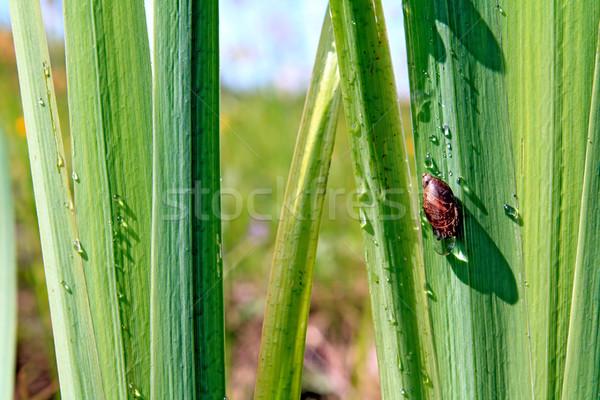 Lumaca estate verde impianto shell animale Foto d'archivio © basel101658