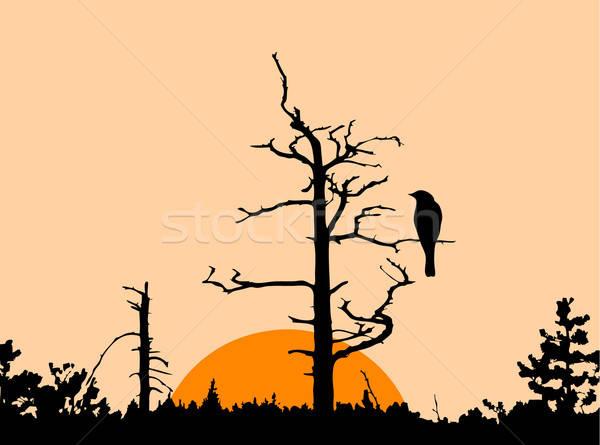 Vektör çizim siluet kuş kuru ağaç Stok fotoğraf © basel101658