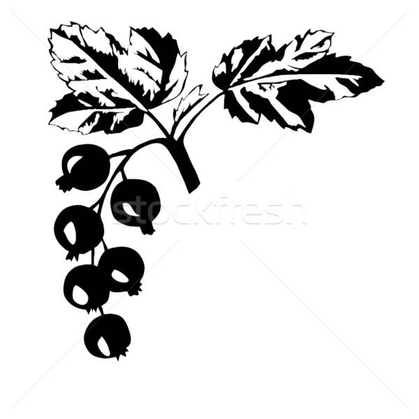 vector silhouette of the black currant on white background Stock photo © basel101658