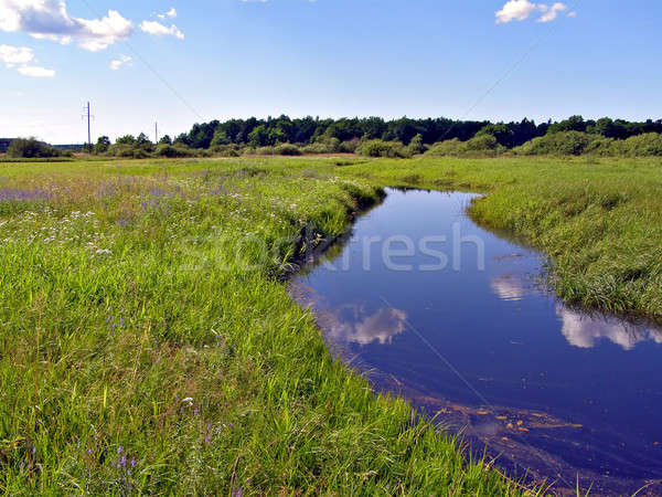 Mały rzeki dziedzinie wody drzewo trawy Zdjęcia stock © basel101658