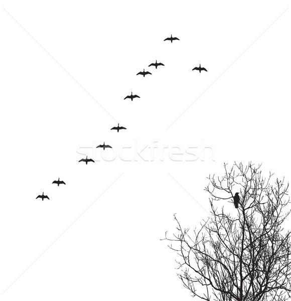 Vektör siluet kaz gökyüzü karga ağaç Stok fotoğraf © basel101658