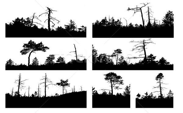Vektör çizim siluetleri ağaç beyaz dizayn Stok fotoğraf © basel101658
