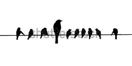 Zdjęcia stock: Wektora · sylwetki · ptaków · drutu · charakter · czarny