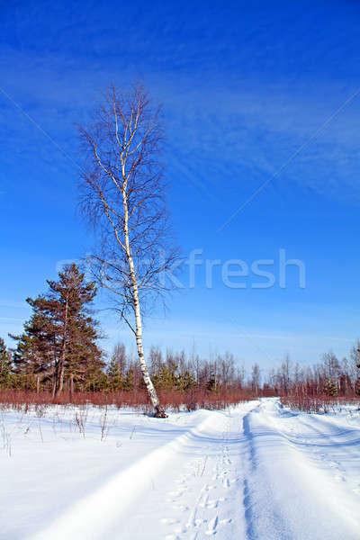 Starzenie się drogowego śniegu niebo samochodu drewna Zdjęcia stock © basel101658