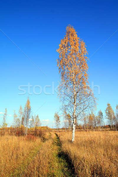 Betulla autunno foglia verde viaggio nero Foto d'archivio © basel101658