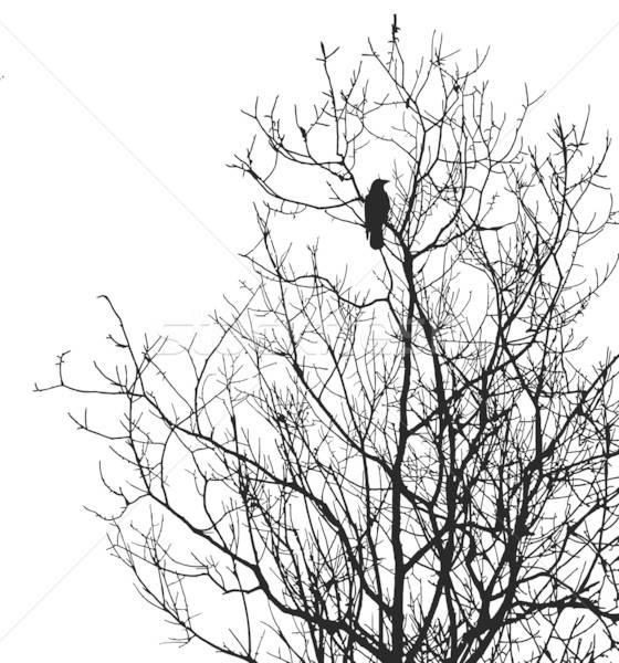 Vektör çizim siluet ağaç yalıtılmış beyaz Stok fotoğraf © basel101658