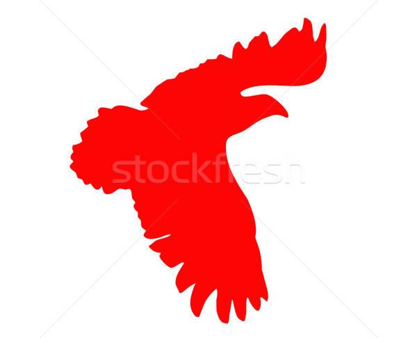silhouette of the ravenous bird on white background Stock photo © basel101658