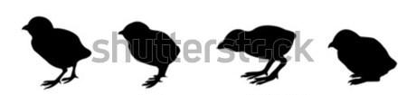 Vektor Zeichnung Silhouette Natur Design Hintergrund Stock foto © basel101658
