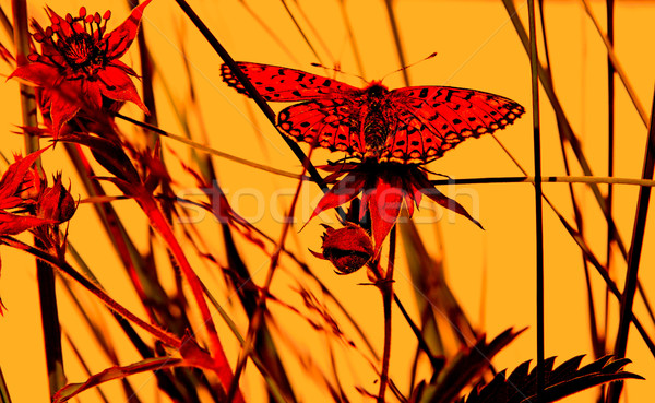 butterfly on herb under red illumination Stock photo © basel101658
