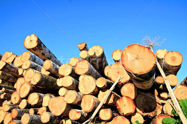 saw tree Stock photo © basel101658