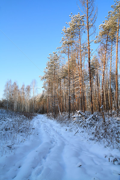rural road in winter wood Stock photo © basel101658